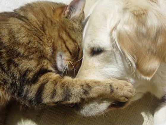chat chien patte museau