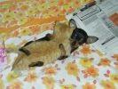 chaton chiot lit