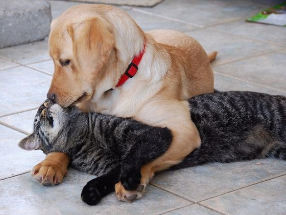 photo chien chat bisou
