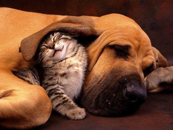 chien chaton protection oreille