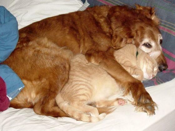 chien roux chat roux