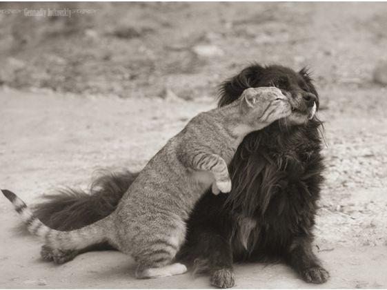 chat decouvre chien