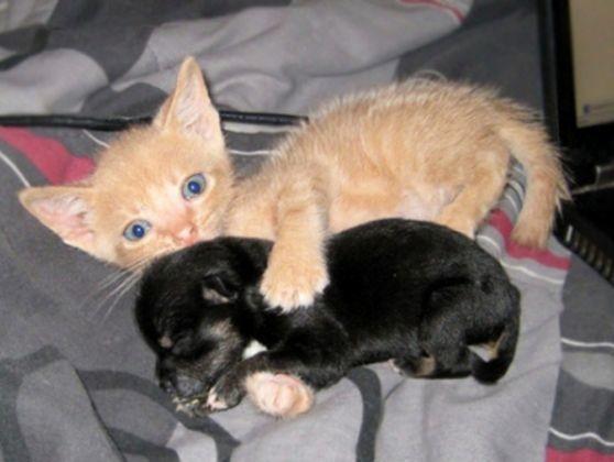 chaton roux petit chiot noir
