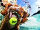 chien balle piscine