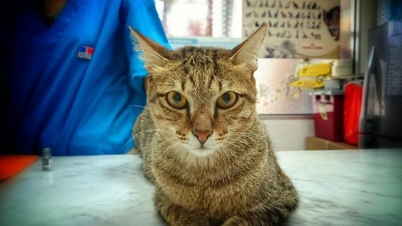 Tout savoir sur la stérilisation du chat : un expert répond à vos questions