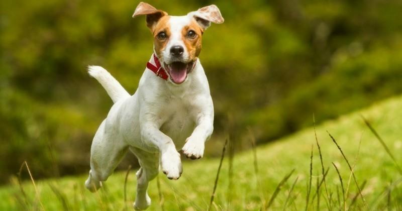 Mon chien bio : Wamiz se met au vert !