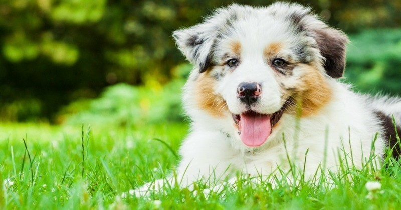 5 herbicides inoffensifs pour les animaux