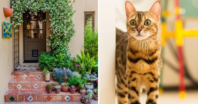comment installer une chati re parfaite pour son chat loisirs wamiz. Black Bedroom Furniture Sets. Home Design Ideas