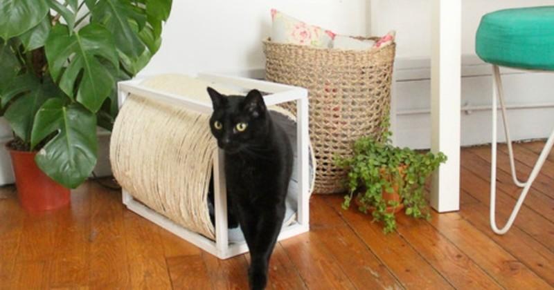 diy fabriquez une cabane pour votre chat avec griffoir int gr loisirs wamiz. Black Bedroom Furniture Sets. Home Design Ideas