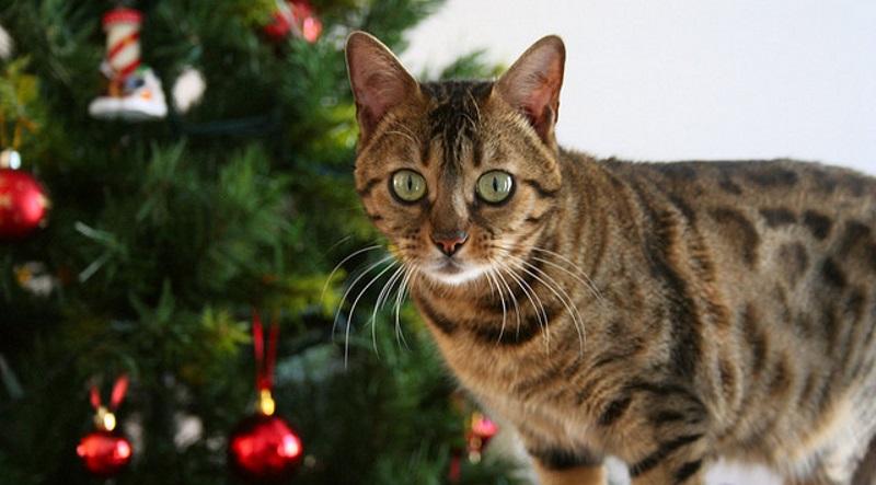 5 astuces pour préserver un sapin de Noël des assauts d'un chat ...