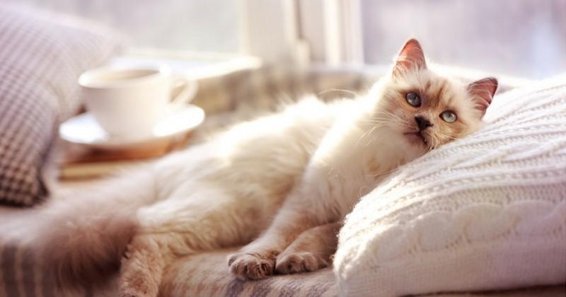 Comment obtenir une chatte serrée HD noir blanc porno
