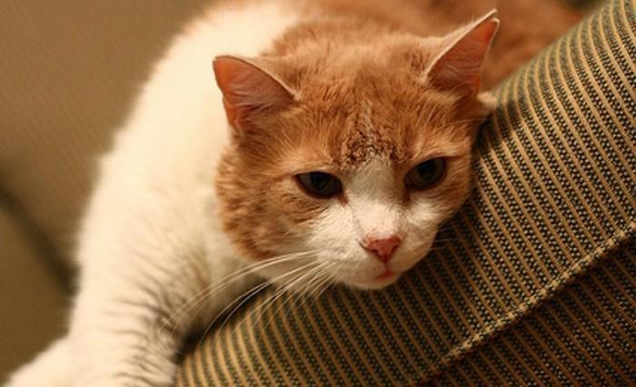 comment savoir si mon chat est stress les signes du. Black Bedroom Furniture Sets. Home Design Ideas