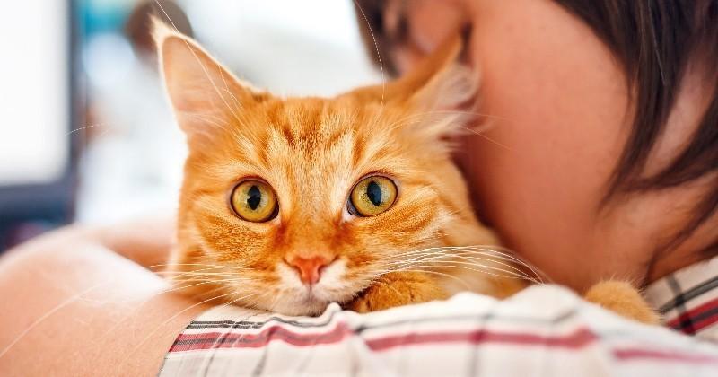 7 excellentes raisons d 39 accueillir un chat chez soi loisirs wamiz. Black Bedroom Furniture Sets. Home Design Ideas