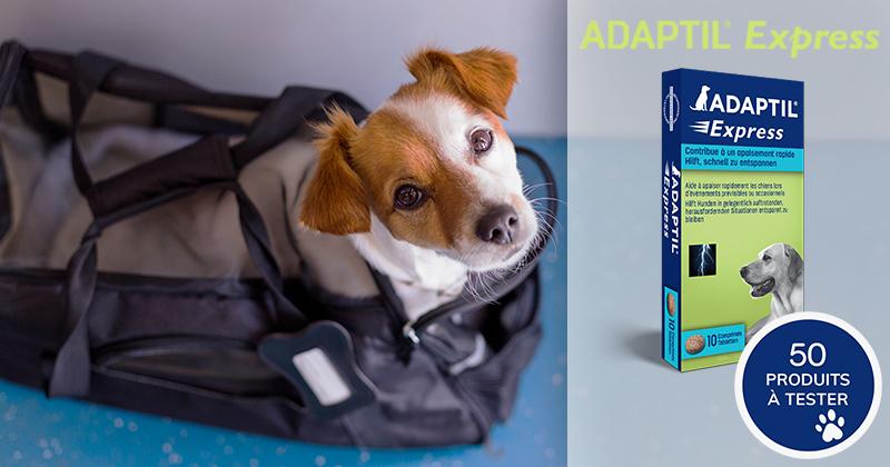 Testez les comprimés ADAPTIL® EXPRESS avec votre chien !