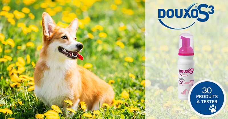 Testez la mousse DOUXO S3 CALM avec votre chien