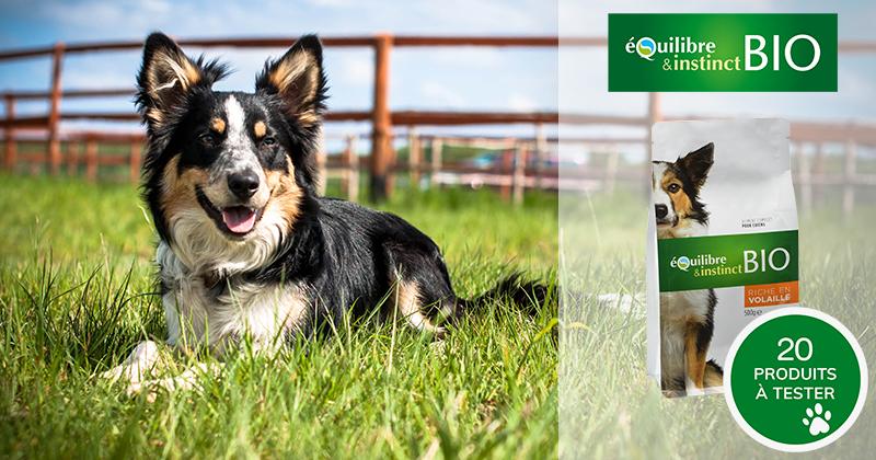 Testez les croquettes BIO de viandes fraîches à la volaille avec votre chien !