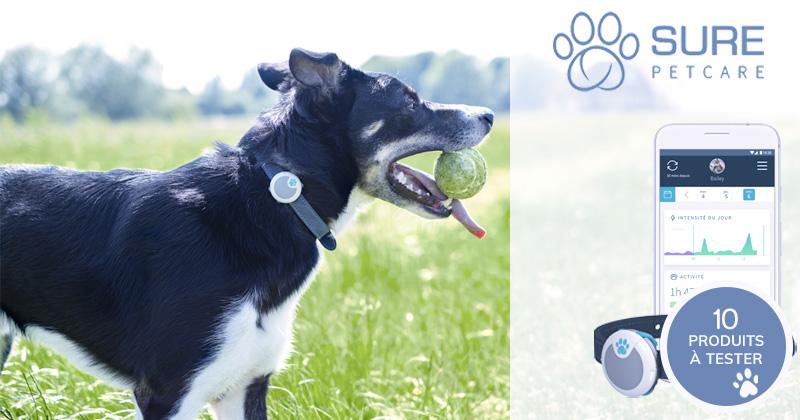 Testez le traqueur d'activités et de comportement Sure Petcare pour chien !