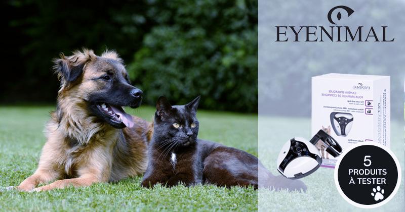 Testez gratuitement la caméra embarquée, Pet Videocam avec votre chat ou chien !