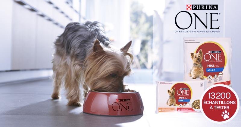 13 200 kits échantillons PURINA ONE® MINI à tester avec votre petit chien