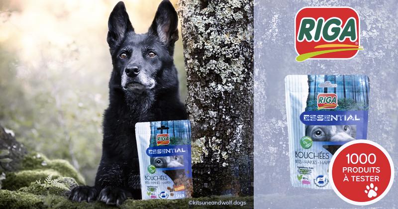 Testez les Bouchées Essential sans gluten avec votre chien
