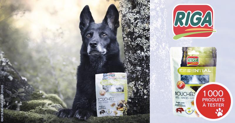 Testez gratuitement les Essential Bouchées 100% Sanglier avec votre chien !