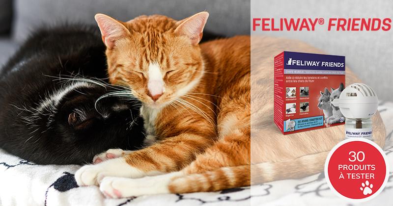 Testez gratuitement FELIWAY FRIENDS avec vos chats