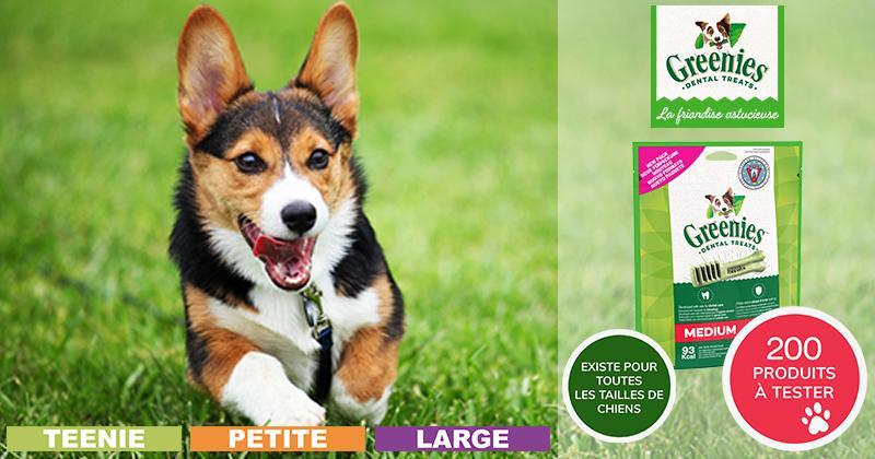 Testez les bâtonnets à mâcher GREENIES™ Original avec votre chien