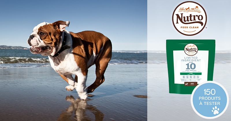 Testez les croquettes NUTRO™ LIMITED INGREDIENT avec votre chien