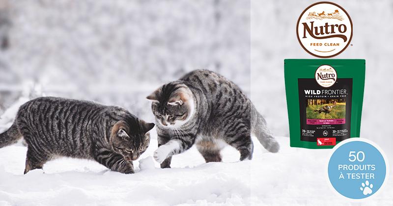 Testez les croquettes Nutro Wild Frontier riches en dinde et poulet avec votre chat