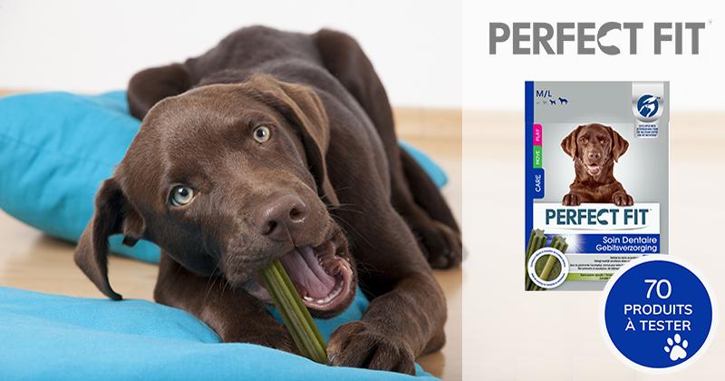 Testez les bâtonnets PERFECT FIT™ Soin Dentaire avec votre chien