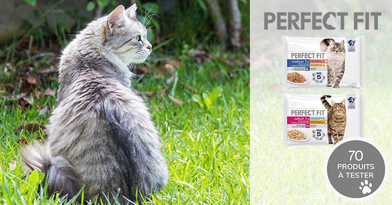 Testez les sachets fraîcheur Perfect Fit™ avec votre chat adulte stérilisé !