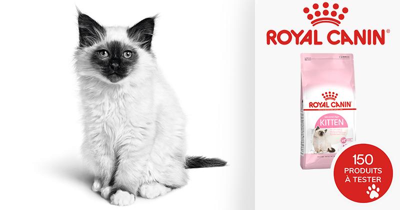 Testez gratuitement l'aiment Royal Canin Kitten avec votre chaton