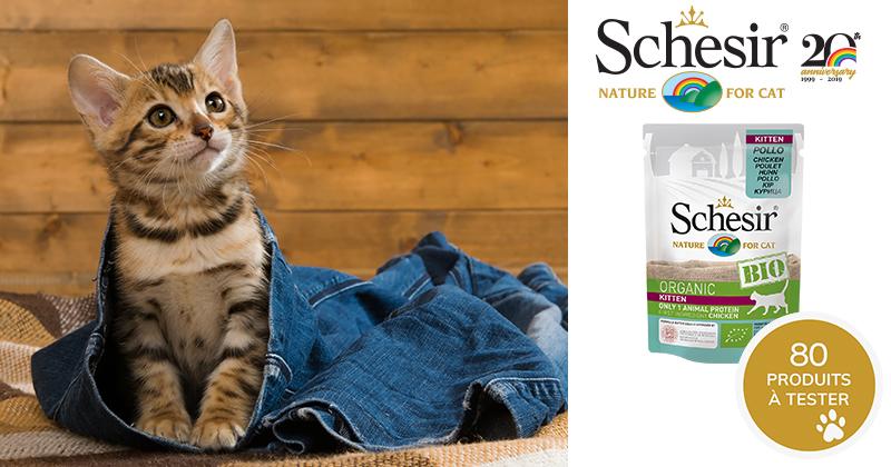 Testez Schesir Humide Kitten BIO avec votre chaton