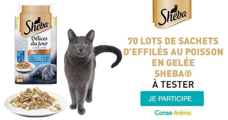 testez les d lices du jour au poisson en gel e sheba avec votre chat conso wamiz. Black Bedroom Furniture Sets. Home Design Ideas