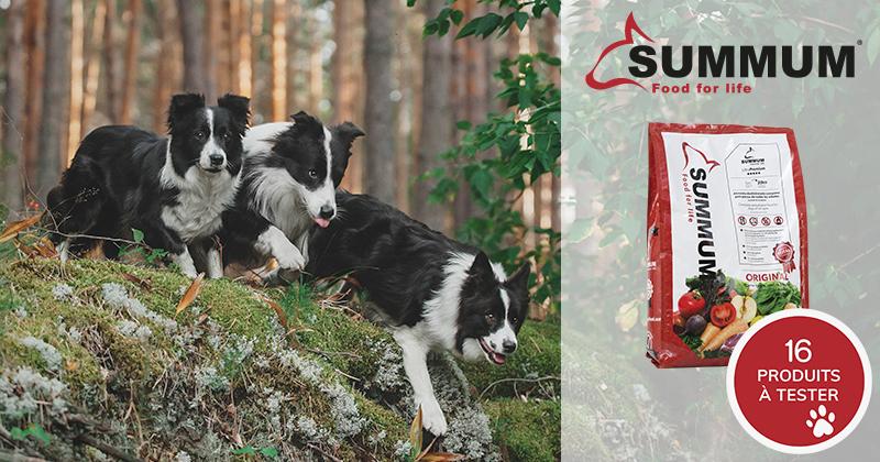 Testez gratuitement Summum original avec votre chien