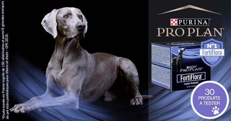 Testez les PURINA® PRO PLAN® FortiFlora® Probiotique avec votre chien