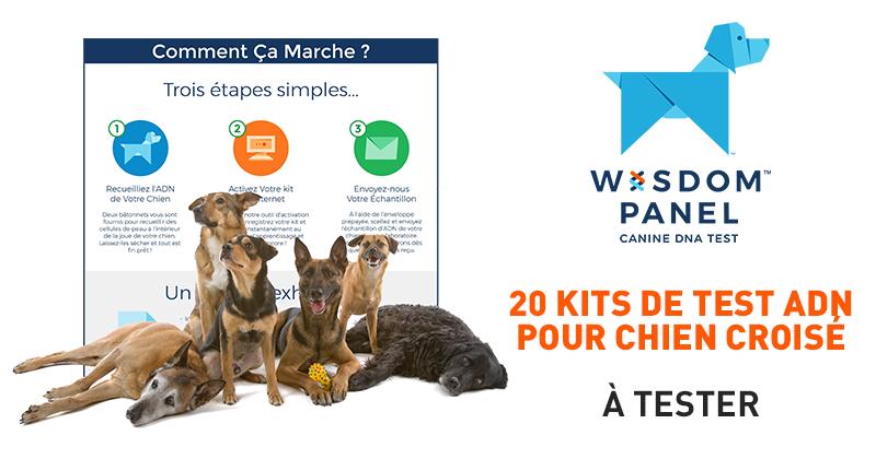 Découvrez le test ADN Wisdom Panel 2.0 avec votre chien croisé
