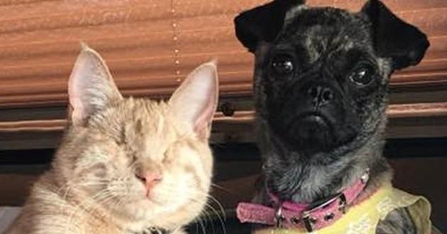 chien paralysé chat aveugle