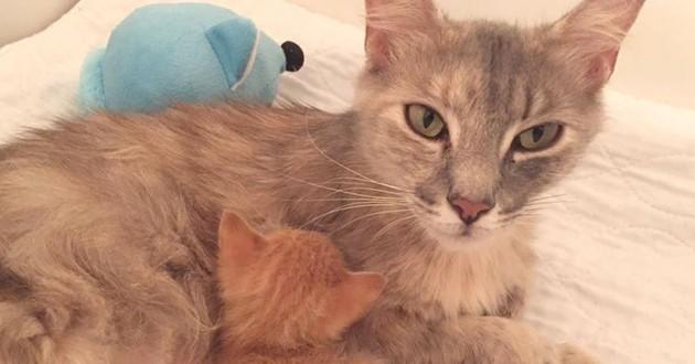 Chat abandonné maman adoption