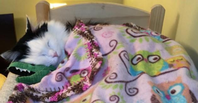chat lit poupée