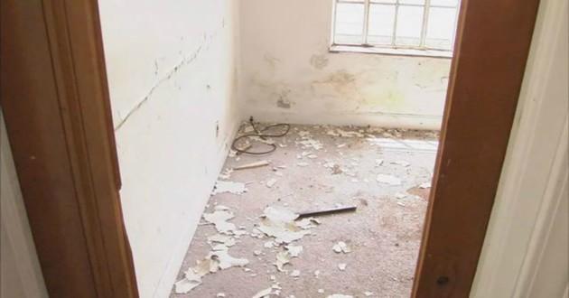 chien maison abandonnée