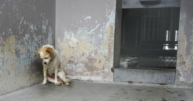 chien refuge triste
