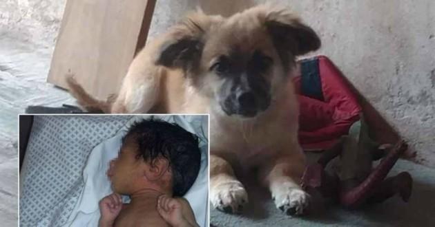 chien sauve bébé