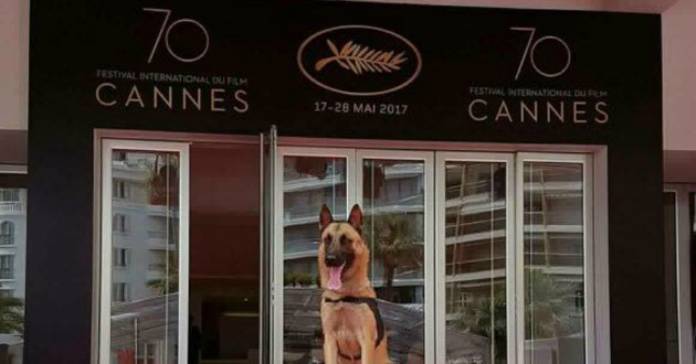 chien cannes marches