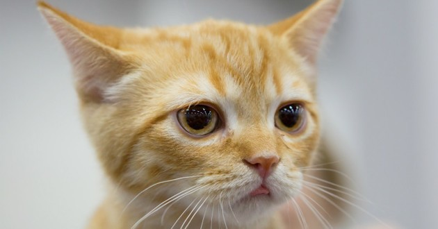 chat incendie