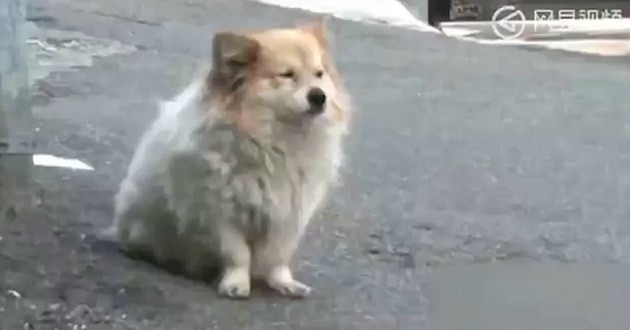 chien corée