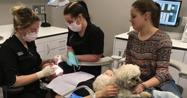 chien zoothérapie dentiste