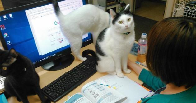 chat au bureau