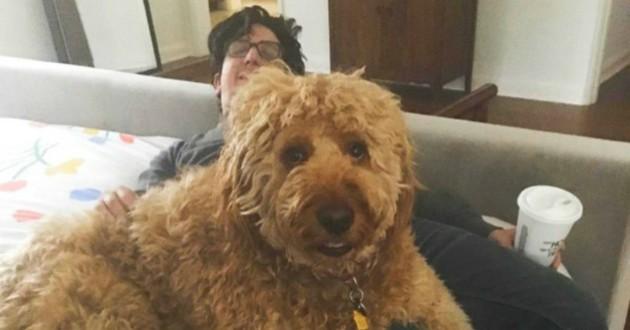 chien géant star