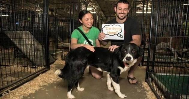 Plus de 500 chiens et chats abandonnés, adoptés en 24 heures !